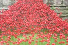 Do you own a poppy from the Tower of London art installation?